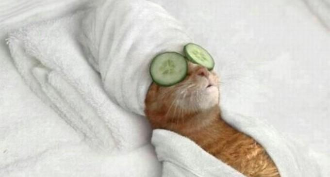 Imagini pentru relaxare