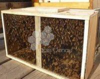 Apicultura, o afacere in care investesc din ce in ce mai multi tineri. Afla cum poti obtine familii de albine pentru primavara 2017