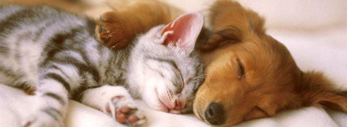 Beneficiile de a detine un animal de companie